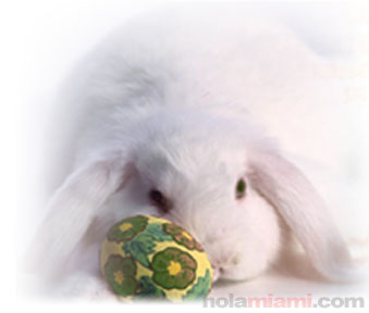 http://www.holamiami.com/images/es/articulos/conejo.jpg